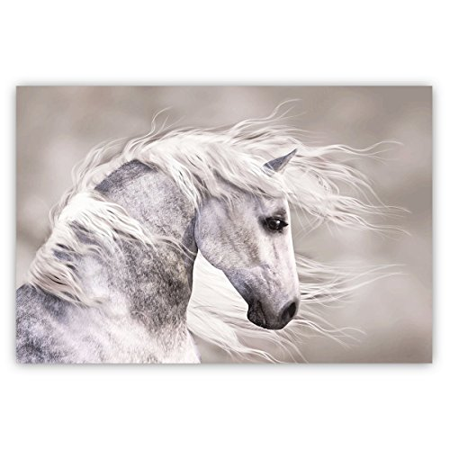 (Studio 500 Museum Grade Canvas Art - Natures Beauty The Wild White Stallion, Global Collection, 48