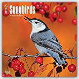 img - for Songbirds 2017 - 12inch x 12inch Hanging Square Wall Photographic Bird Planner Calendar (Multilingual Edition) book / textbook / text book
