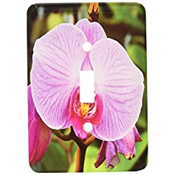 3dRose lsp_88524_1 Palm Springs, California Orchids Us05 Mde0210 Michael Defreitas Single Toggle Switch