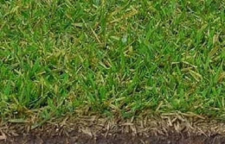 Amazon Com El Toro Variety Of Zoysia Grass Seeds 1 2lb Garden Outdoor