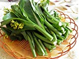 Promotion!!! Choy sum, Chinese cabbage, green vegetable seeds - 200 Seed particles