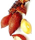 Thai Salacca zalacca 5 Seeds ThailandMrk