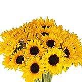 Farm2Door Fresh Sunflowers: 50 Fresh Sunflowers - Farm Direct Wholesale Fresh Flowers