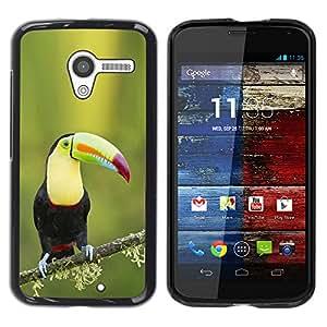 YOYOYO Smartphone Protección Defender Duro Negro Funda Imagen Diseño Carcasa Tapa Case Skin Cover Para Motorola Moto X 1 1st GEN I XT1058 XT1053 XT1052 XT1056 XT1060 XT1055 - Tucan especies ornitología pájaro resorte verde