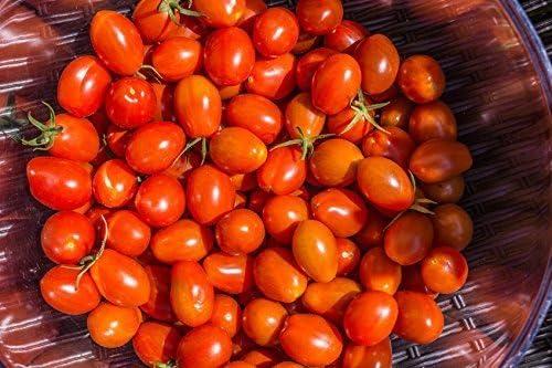 Tomate mexicano de miel//aproximadamente 20 semillas//variedades de tomate dulce//m/ás caro de az/úcar