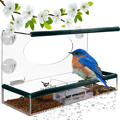 Birdious Wild Window Bird Feeder for Outside: Enjoy Unique Watch Small & Large Birds. Clear See Through, Easy Mounted 4 Strong Suction Cups, Squirrel Proof with Seed Tray. Unusual Gifts