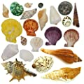 "NiuXTool Sea Shells Mixed Beach Seashells - 500 Gram! Various Sizes Up to 4""! More Than 20 Models Mixed! Perfect for Home Wedding Decor, Fish Tank and Vase Fillers."