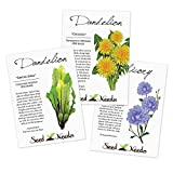 Dandelion Seed Packet Assortment (3 Package Set) Non-GMO Seeds by Seed Needs