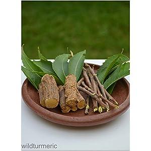 10 Neem Datun - Ayurvedic Chewing Sticks I Teeth & Tongue Cleaner 15