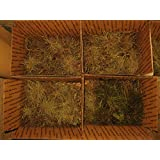 FARMERLY Las Semillas orgánicas: Vivo Bl Aire (Tillandsia Recurvata) Caja de Lot, terrario de