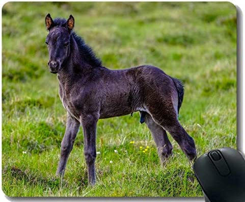 Mousepad de Goma Personalizado, Paisaje del Pony del Ganado ...