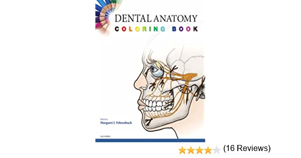 dental anatomy coloring book 1e 9781416047896 medicine health science books amazoncom - Dental Anatomy Coloring Book