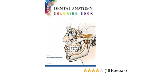 Dental Anatomy Coloring Book: 9781416047896: Medicine & Health ...