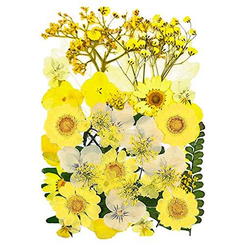 CUIFULI Flores secas para joyas de resina, flores prensadas secas naturales DIY mezcladas multiples hojas secas petalos para velas colgantes de unas, manualidades, manualidades, decoracion floral