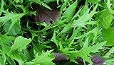 5000 Mizuna Seeds ~ Japanese Salad Greens ~ Exotic Garden Vegetable ~ Annual