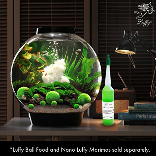 4 luffy marimo moss balls aesthetically beautiful for Moss balls for fish tanks