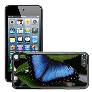 Super Stella Slim PC Hard Case Cover Skin Armor Shell Protection // M00145072 Butterfly Insect Wing // Apple ipod Touch 5 5G 5th