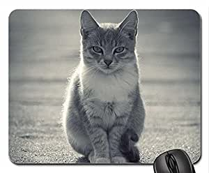 Budda_Cat Cute Cool Decorative Design Animal Cat Mousepad Rainbow Designs