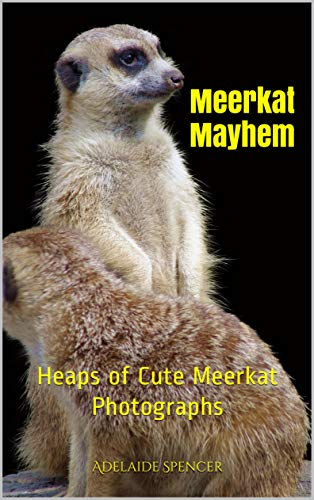 Meerkat Mayhem: Heaps of Cute Meerkat Photographs