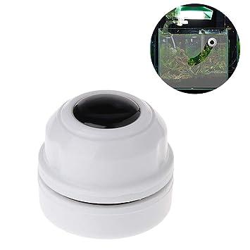 Womdee - Imán magnético de Limpieza de Algas para Acuario o pecera, imán de neodimio con Ventosa, diseño ergonómico de ángulo Antideslizante: Amazon.es: ...