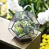 Hashcart Pentagon Ball Shape Geometric Glass Terrarium, Eloquent Design, Plants, Succulents, Votive Candle Holder (Black)