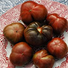 Rare Black Brandywine Big Tomato, 20 Seeds, sweet juicy rich tomato flavor TS227T