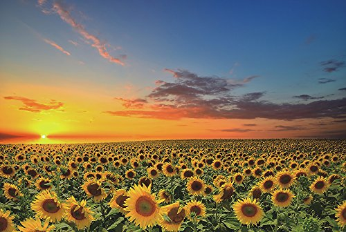 (Funnybox Sunflowers in The Fields at Sunset-Wooden Jigsaw Puzzles 1000 Piece Teens Family)