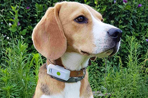 Weenect Dogs - The GPS tracker for Dogs 6