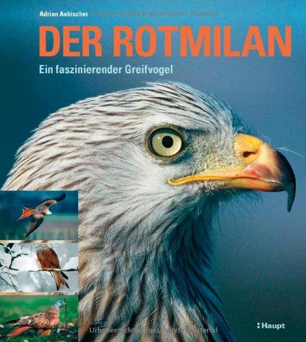 Der Rotmilan: Ein faszinierender Greifvogel