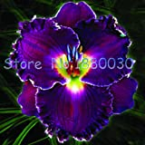 50PCS 24 different colors Japanese hibiscus flowers potted bonsai courtyard garden seeds Hibiscus seeds