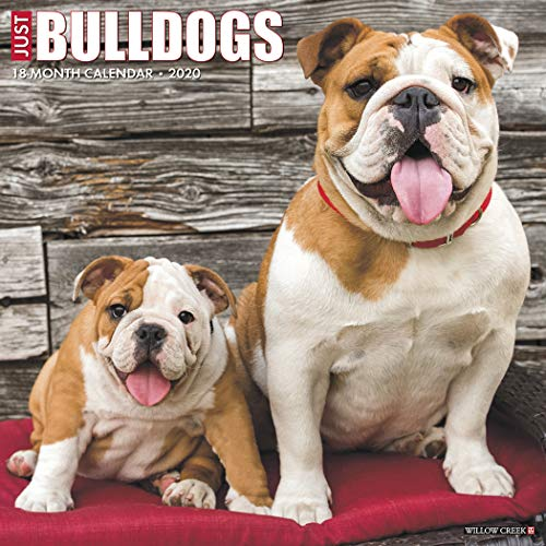 Just Bulldogs 2020 Wall Calendar (Dog Breed -