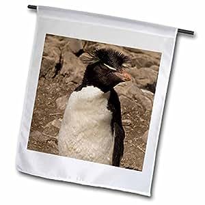 Danita Delimont - Penguins - Rockhopper Penguin, West Falkland. Falkland Islands - SA09 POX0049 - Pete Oxford - 18 x 27 inch Garden Flag (fl_86505_2)