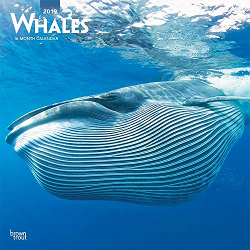 2019 Whales Wall Calendar, Sea Life by BrownTrout