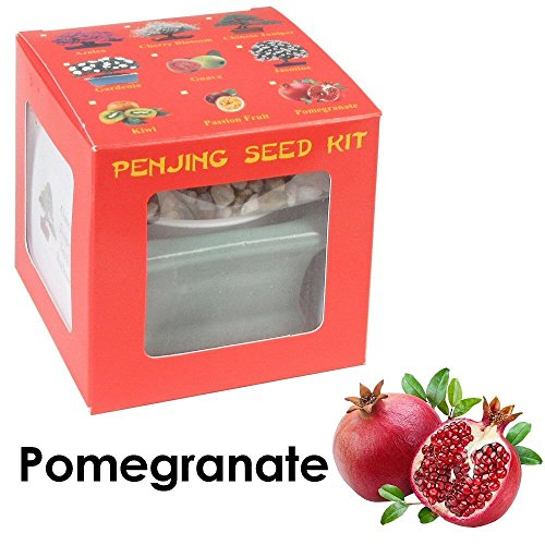(Eve's Garden Pomegranate Penjing Seed Kit, the Chinese Art of Bonsai, Complete Kit to Grow Fruit-Bearing Pomegranate Penjing from Seed)