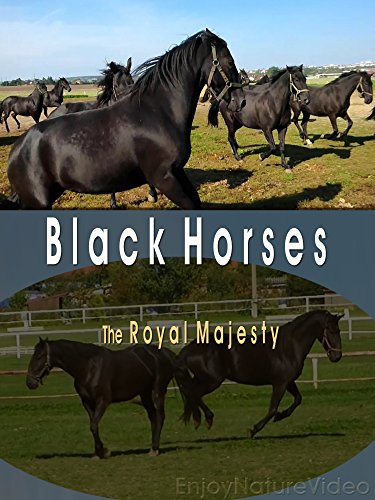 Black Horses. The Royal Majesty by