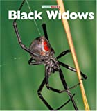 Black Widows, Peter Murray, 1567669778