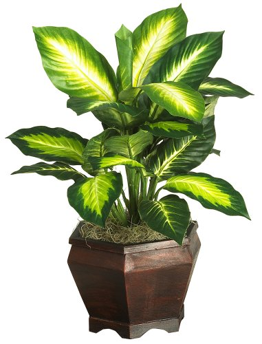 Nearly Natural 6592-05 Golden Dieffenbachia with Wood Vase Decorative Silk Plant, Green by Nearly Natural