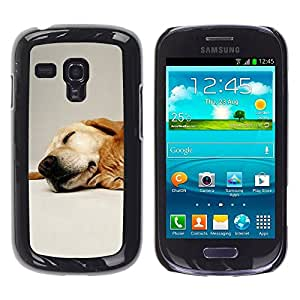 TopCaseStore / la caja del caucho duro de la cubierta de protección de la piel - Labrador Retriever Pet Dog Golden - Samsung Galaxy S3 MINI NOT REGULAR! I8190 I8190N