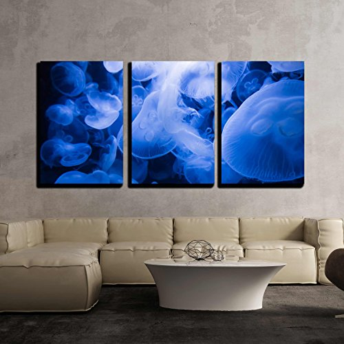 Sea Salt 3 Piece (wall26 - 3 Piece Canvas Wall Art - Transparent Jellyfish - Modern Home Decor Stretched and Framed Ready to Hang - 16