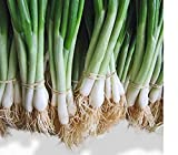 He Shi Ko Bunching Onion Scallions 200 Seeds (Organic) UPC 647923989571