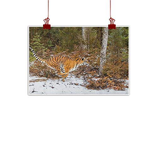 - Canvas Wall Art Safari,Bengal Tiger in Snowy Jungle Hunting and Cruising for Prey Furry Majestic Mammal, Orange Green 48