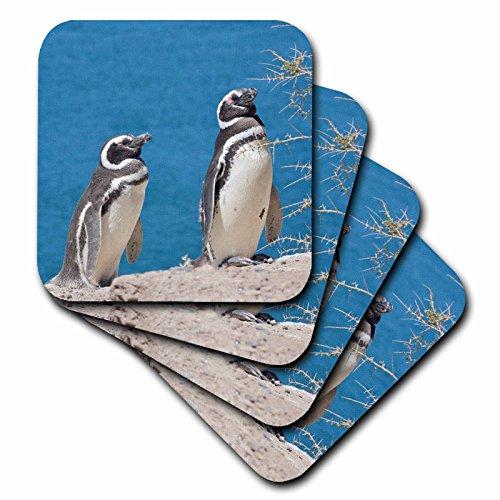 3dRose CST_85420_1 Argentina, Peninsula Valdes, Penguin Colony-Sa01 Mme0449-Michele Molinari-Soft Coasters, Set of 4 -