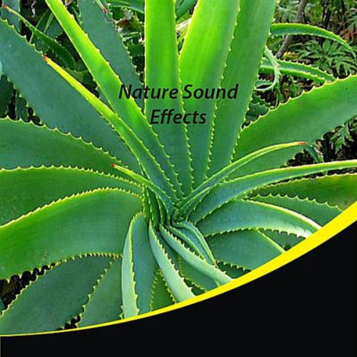 Nature Sound Effects (Digital Sound Effects Cd)