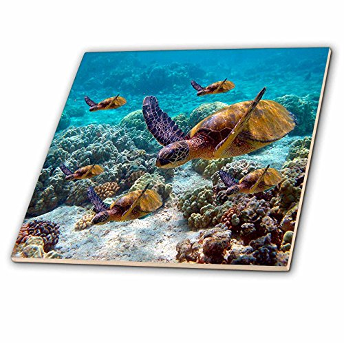 - 3dRose ct_26850_1 Sea Turtles-Ceramic Tile, 4-Inch