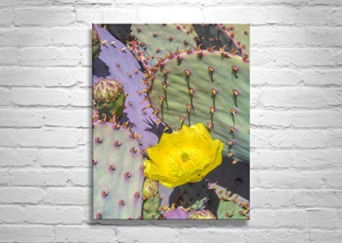 Purple Prickly Pear Art, Framed Canvas, Ready to Hang Art, Blue Cactus Art, Cactus Flower Photo