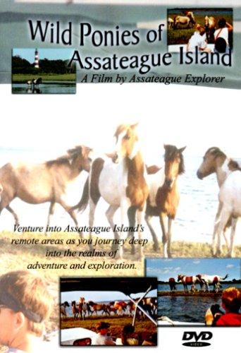 Wild Ponies Of Assateague Island by Assateague Explorer Llc/Global