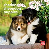 Shetland Sheepdog Puppies 2013 Mini 7X7 Wall