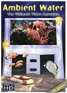 Ambient Water: The Ultimate Aquarium