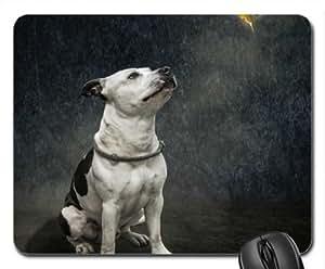 Pit bull gazing at the bird Cute Cool Decorative Design Animal Dog Mousepad