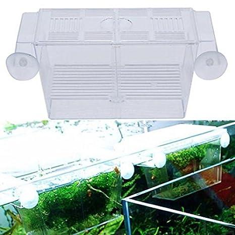 Bruselas08 - Caja de aislamiento para pecera de acuario, para cría de peces, cría, cría: Amazon.es: Hogar